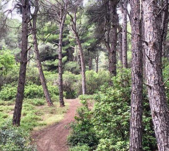 Mandraki Forest