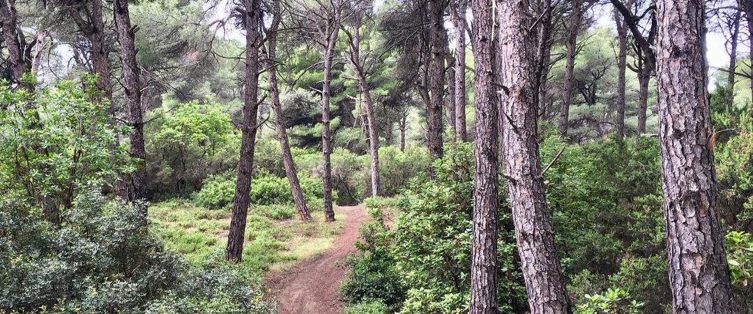 Δάσος Μανδράκι