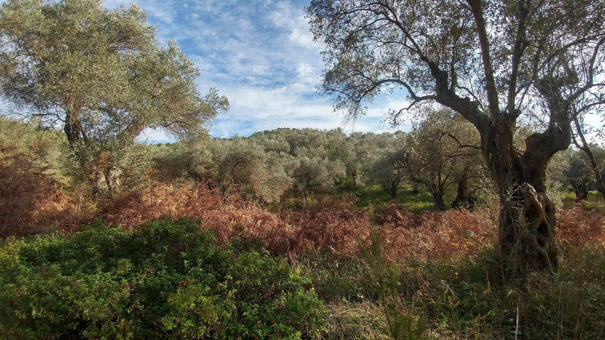 Land 3.800m² for sale in Agia Paraskevi